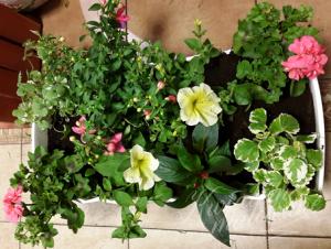 Kwiaty doniczkowe Łódź
