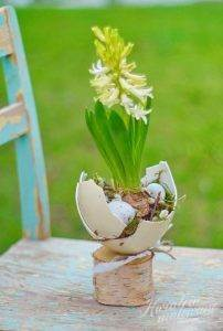 żonkil w skorupce jajka
